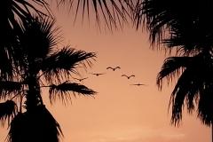Palms&gulls