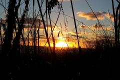 Sunset&Oats