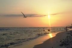 sunset-with-bird