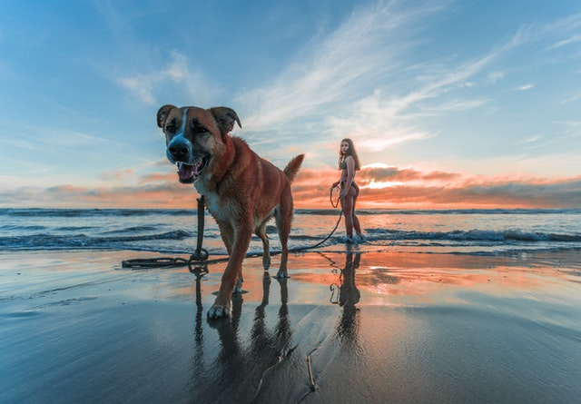 Is Panama City Beach Pet Friendly?